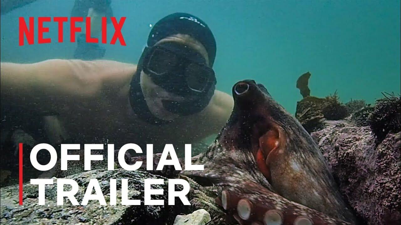 My Octopus Teacher – Filme care evidentiaza cel mai bun lucru al umanitatii #6