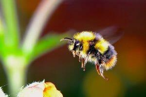 informatii despre albine pentru copii - pe intelesul copiilor
