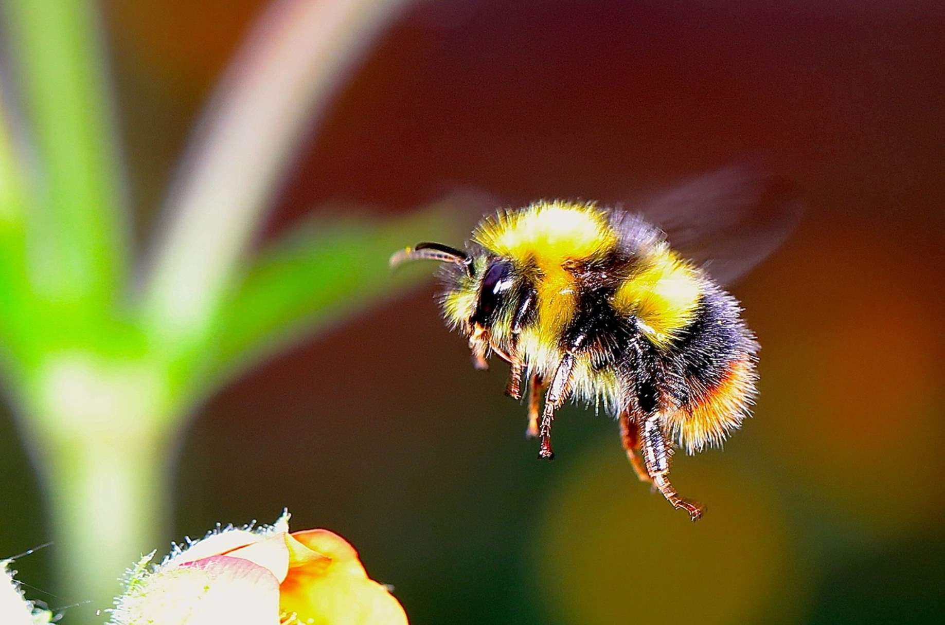 Informatii despre albine pentru copii + 7 Jocuri
