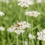 Informatii despre albine pentru copii + 7 Jocuri 2