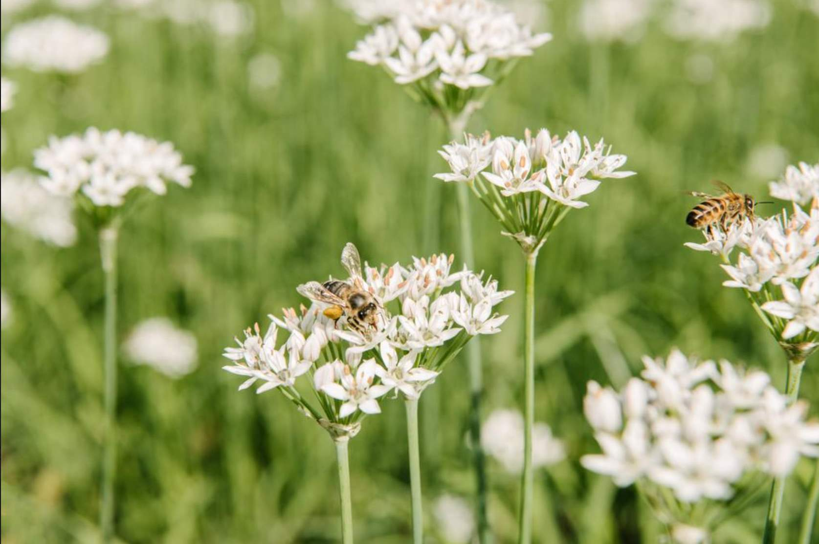 Aduna cele mai bune insecte benefice pentru gradina ta 7