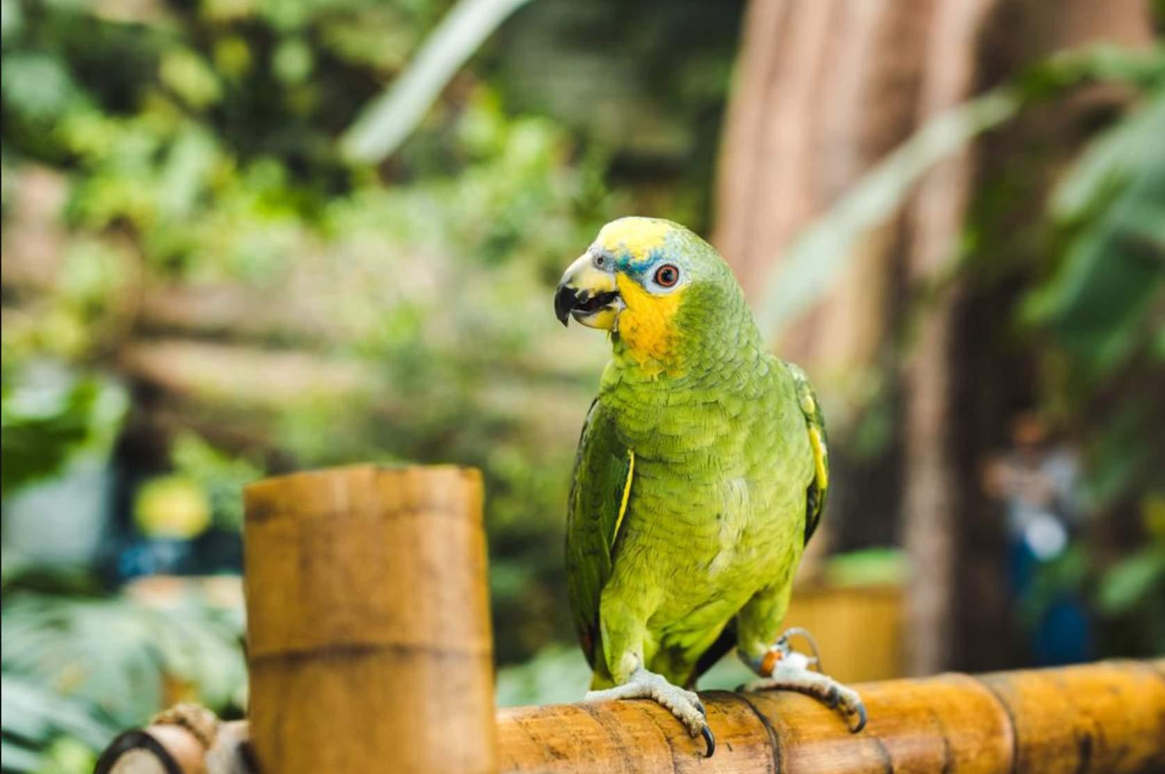 Nume de papagalite - cele mai populare si frumoase nume pentru papagali 9